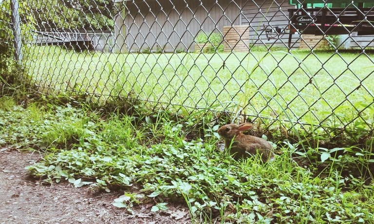 Itty bitty bunny outside the Ranger station at work!
