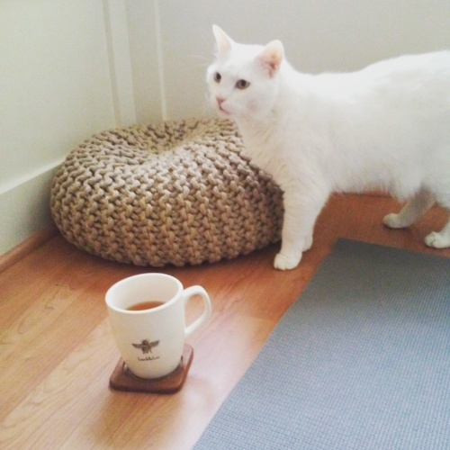 Yoga, tea and a cat called Indie
